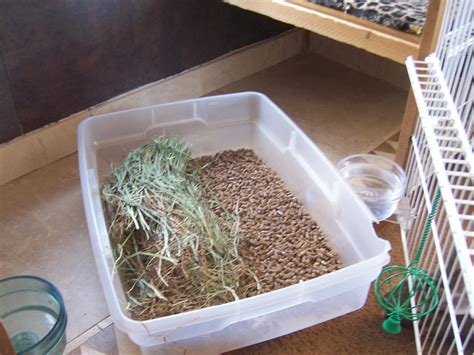 how to litter a odor free home rabbits indoors