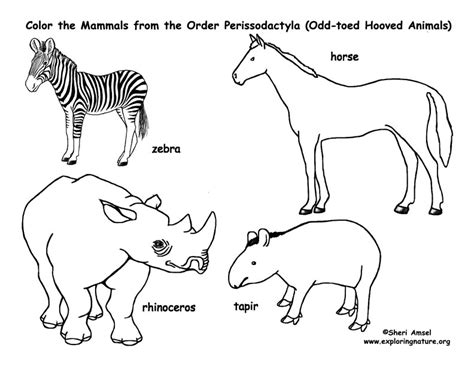 prehistoric mammals coloring pages coloring pages