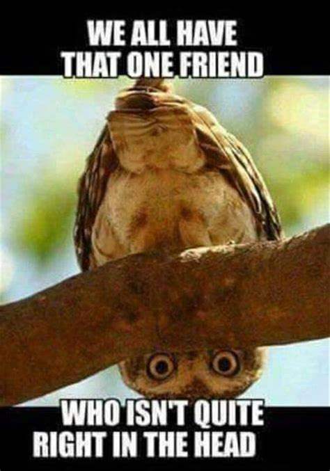 pictures with captions 149 best bird memes images on