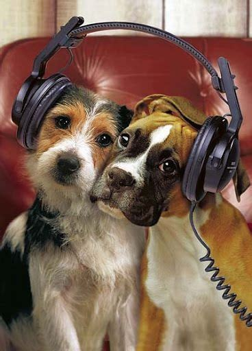 dogs soundtrack pictures breeders guide