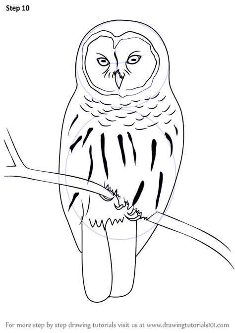 how to draw an owl learn to draw a cute colorful owl in learn how to draw a barred owl birds step by step