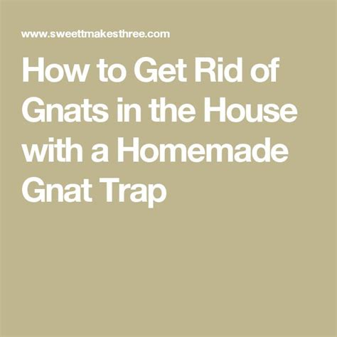 gnats in the house 1000 ideas about gnat traps on pinterest gnat traps killing wasps and vinyl cover