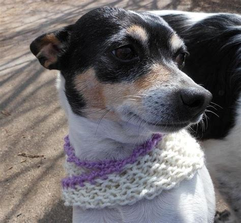 knitting pattern dog scarf how to knit a mobius dog scarf 171 knitting crochet