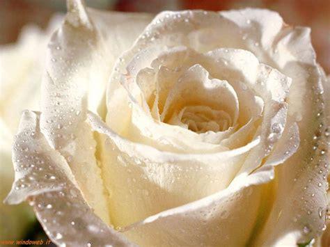 rosse fiori foto foto gratis per sfondi desktop