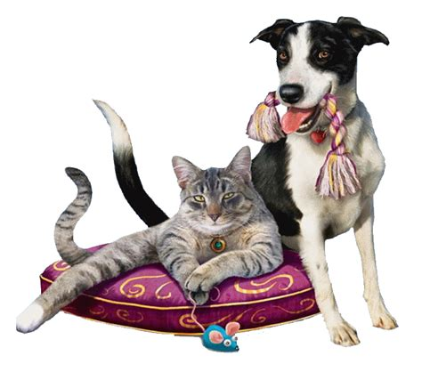 imagenes bonitas de animales que se mueven 10 im 225 genes que se mueven de perros im 225 genes que se mueven