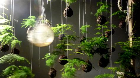 japanese string gardens suspend plants  ground colossal