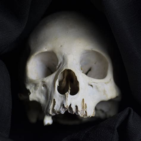 skull reference book 5 facts about the human skull and 5 high res images