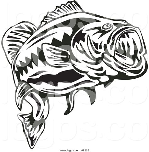 bass fish line drawing www pixshark com images