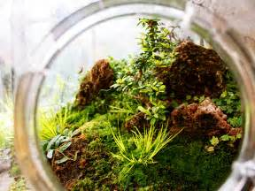 Home Decor Blogs From India diy make your own tiny terrarium garden that ll stay