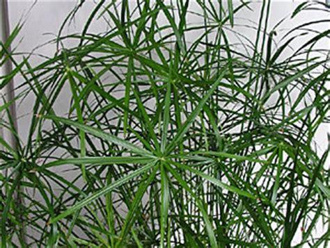 pflanzen gegen staub widmen sie sich den zimmerpflanzen salzburg magazin