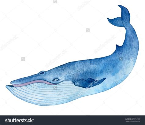 Blue Whale Drawing how to draw a blue whale pencil drawing