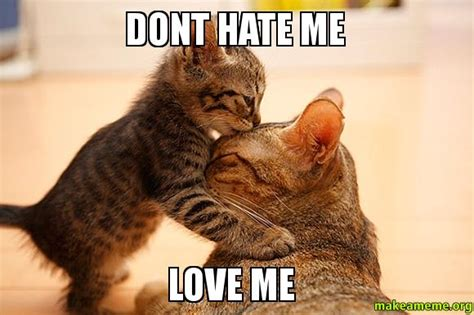 Love Hate Meme - love hate cat memes