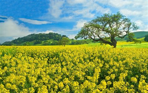 field of flowers pictures free field of flowers wallpapers