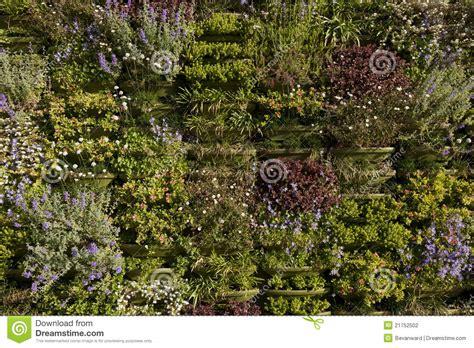 verde giardino parete verde o primo piano verticale giardino