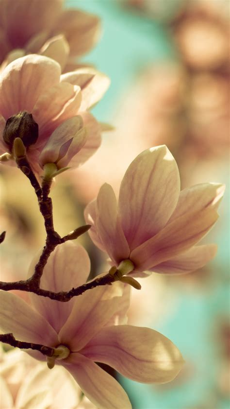 wallpaper flower untuk android spring flowers blossom samsung android wallpaper free download