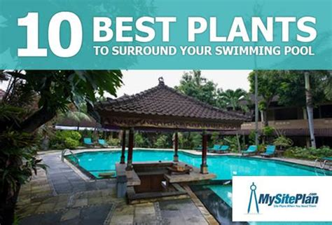 Pool Shed Plans 10 Best Plants To Surround Your Swimming Pool My Site Plan
