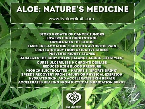 Nature S Detox Benefits by Health Benefits Of Aloe Health Fitness