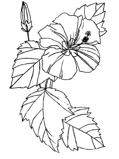 free coloring pictures of tropical flowers hawaiian flower coloring pages az coloring pages