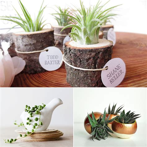 plants for desk cute office plants popsugar smart living