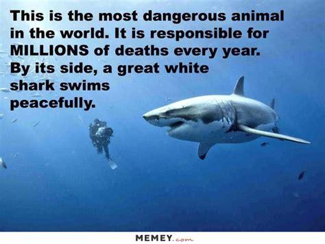 Shark Meme - shark memes funny shark pictures memey com