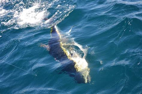fishing boat charters outer banks phideaux fishing outer banks charters