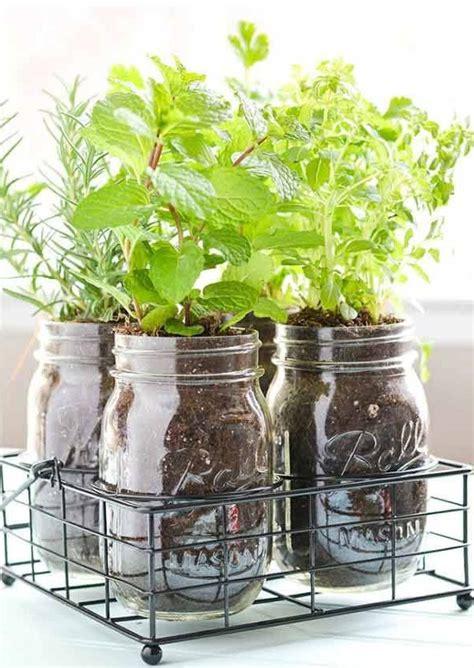 start growing herbs indoors   windowsill