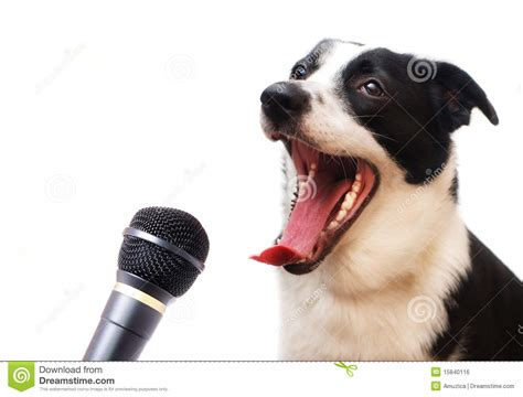 puppy singing singing royalty free stock image image 15840116
