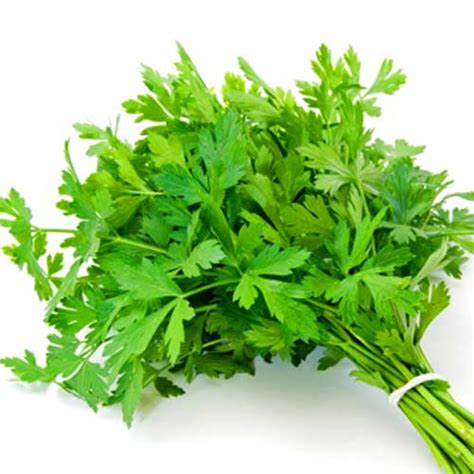 organic italian parsley seeds natural seed bank