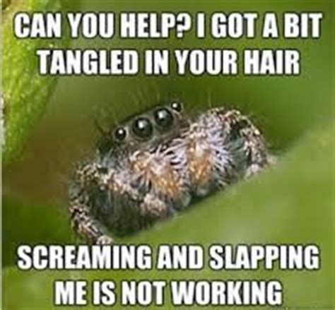 Shower Spider Meme - have some quot misunderstood spider quot jokes for when you re in your blind