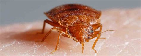 detecting bed bugs detect bed bugs in hotels homes charleston k9 bed bug