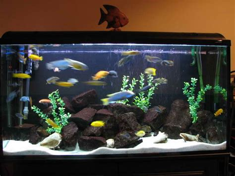 indoor how to decorate fish tank designs ideas fish tank
