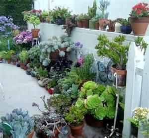 cactus container garden succulent container gardens home outdoor