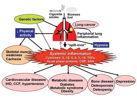 Biomars Lung essay report dangers of