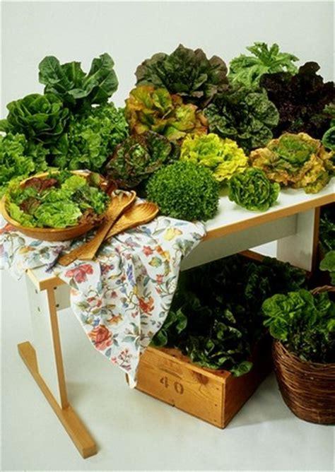 Outdoor Kitchen Ideas Patio Lime Gardening Tips Lime For Vegetable Garden