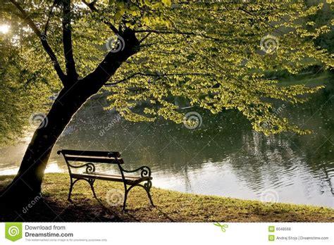 bench under tree bank unter dem baum lizenzfreie stockfotos bild 6048568