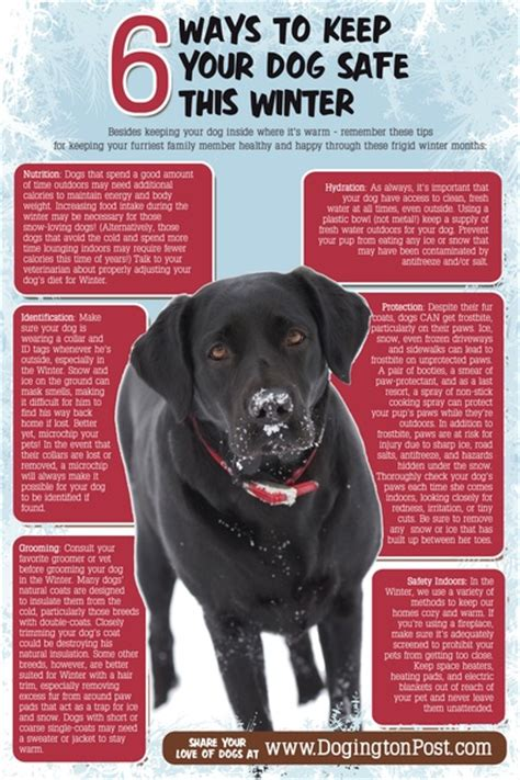 how do you keep your dog off the couch infographic 6 ways to keep your dog safe this winter