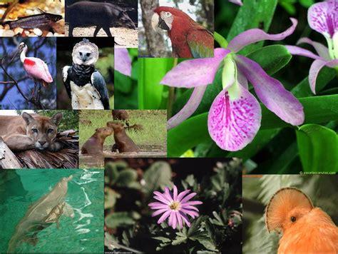la fauna pictures la flora y la fauna