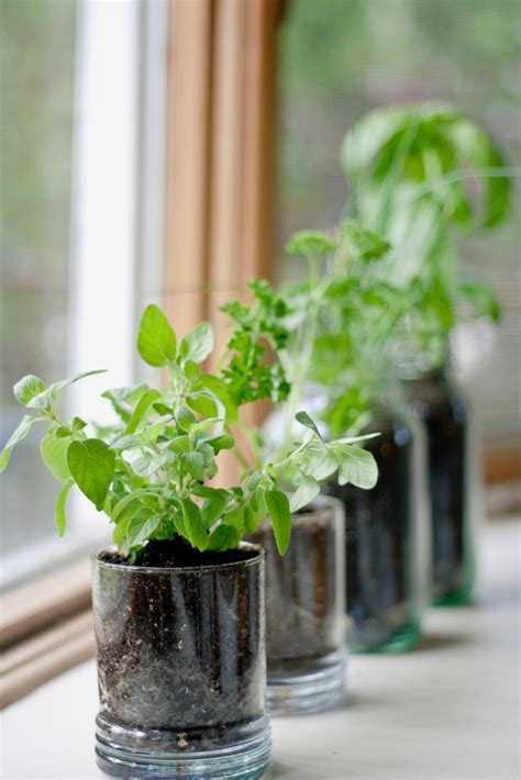grow herbs in kitchen creative ideas for growing your own kitchen herb garden