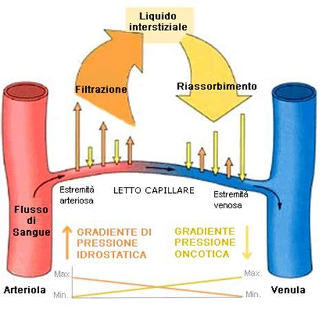 letto capillare versamento pleurico