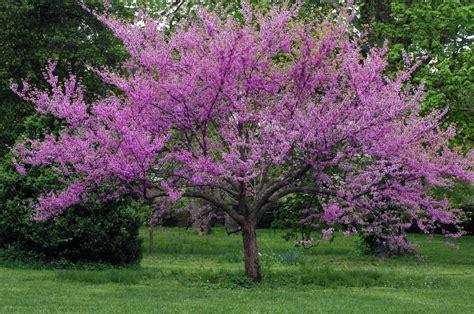 trees most valuable landscape element