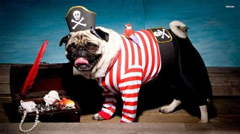 pug costume wars pugs in wars costumes wallpaper