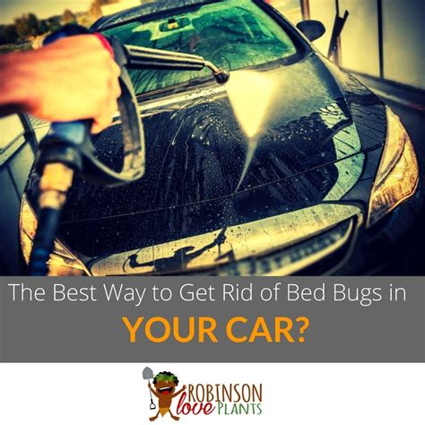 easiest way to get rid of bed bugs what is the best way to get rid of bed bugs in your car