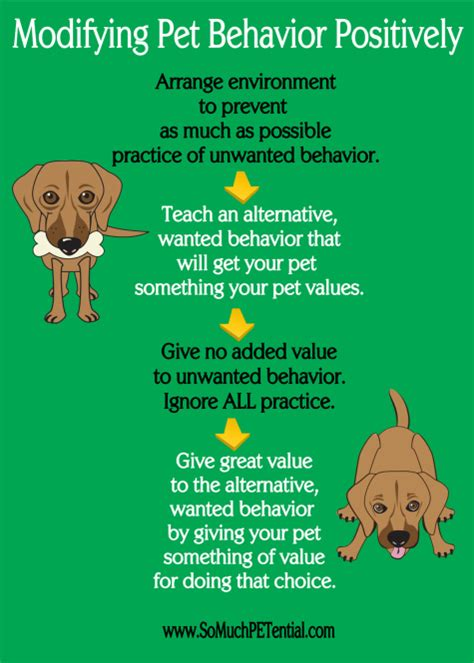 behavior problems four steps to solving pet behavior problems so much petential
