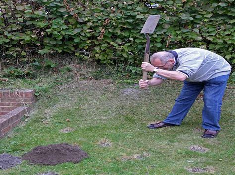 moles in backyard gardening landscaping how to get rid of moles in yard