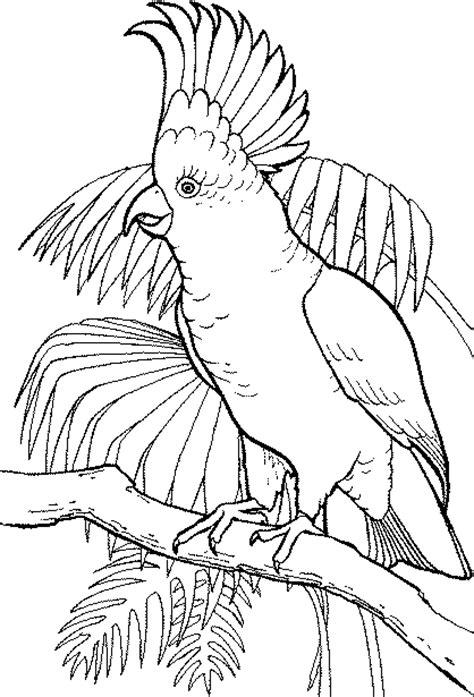 gambar mewarnai burung kakak tua gambar mewarnai lucu