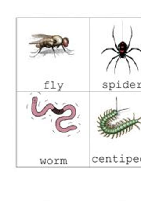 printable insect flash cards english worksheet insect flash cards set 2
