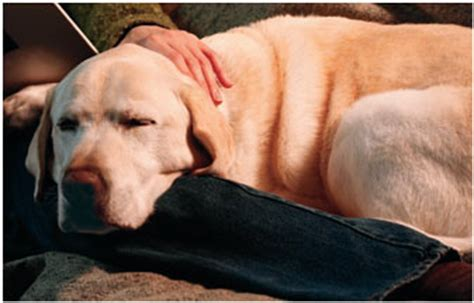 valium for dogs valium dosage for dogs with seizures
