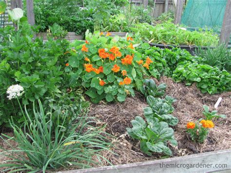 9 Secrets for a Low Maintenance Easy Garden   The Micro