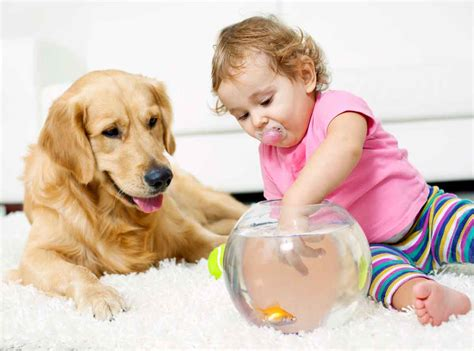 Child Area Rug The Best Types Of Carpet For Pets Amp Kids Complete Chem