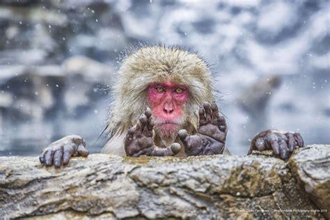 funniest animals    comedy wildlife